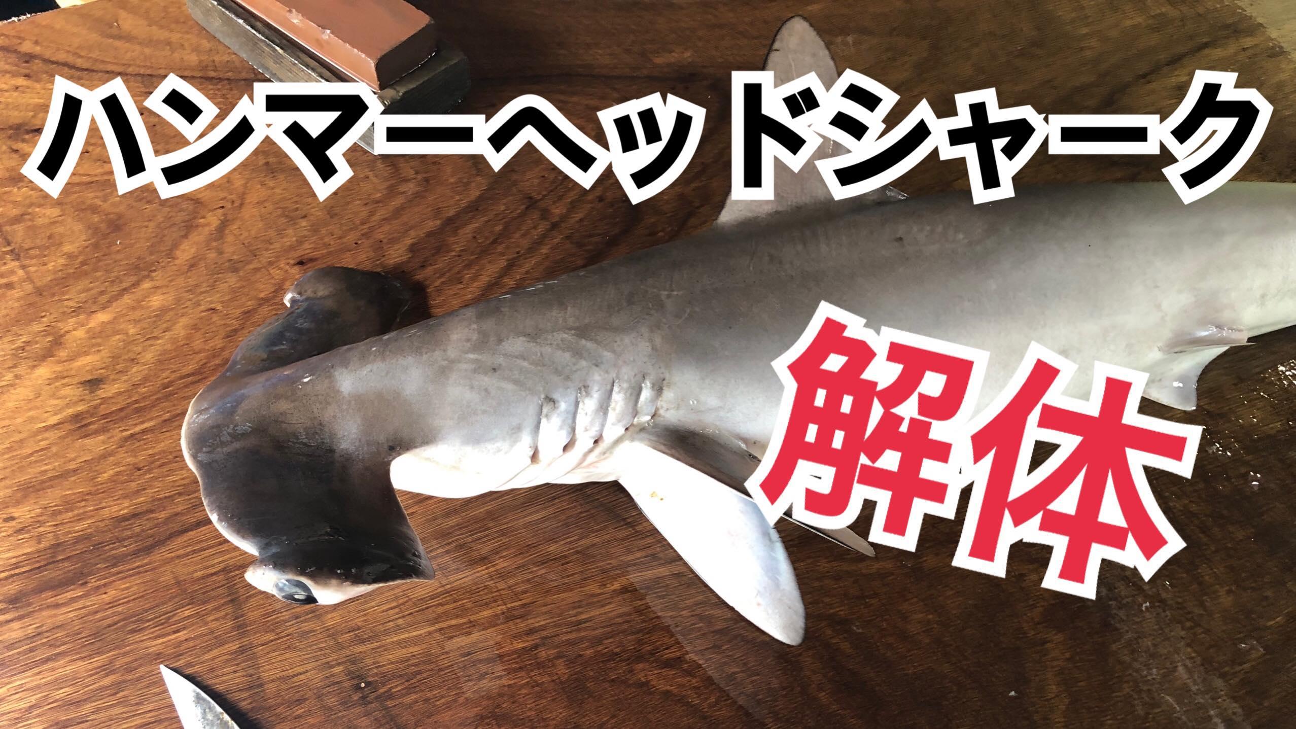 重大屋鯨肉専門ハンマーヘッドシャーク解体